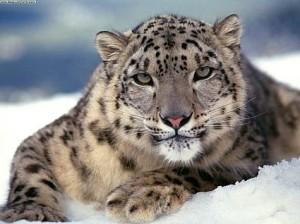 Snow Leopard 10.6.5